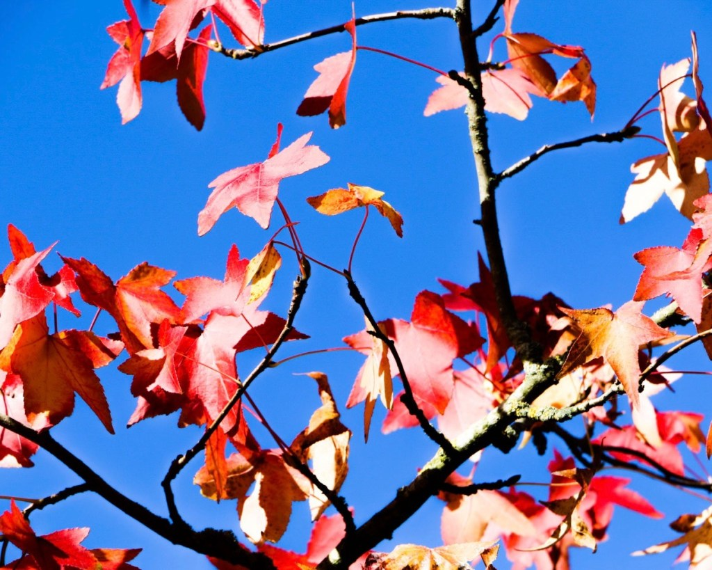 les feuilles d'arbre colorés sur un fond de ciel bleu