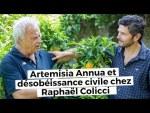 Artemisia Annua et désobéissance civile chez Raphaël Colicci