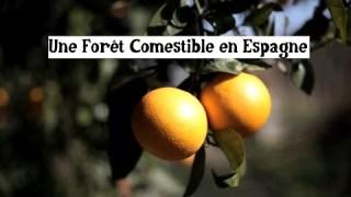La forêt comestible de Juan Anton
