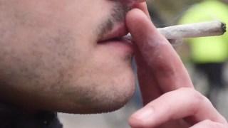[ REPORTAGE ] Plongée au coeur du trafic de cannabis pendant le confinement