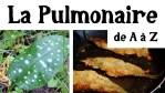 La Pulmonaire de (presque) A à Z