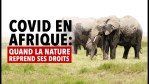 Covid en Afrique : quand la nature reprend ses droits