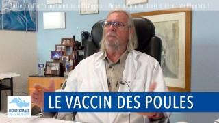 Le vaccin des poules