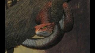Méfiez vous des serpents.