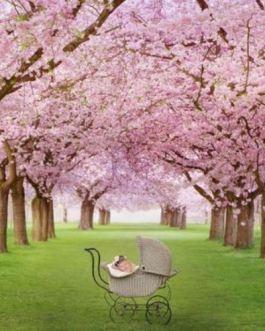 U-Heft Hülle Kirschblütenhain mit Kinderwagen
