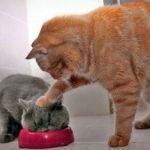 猫背を治して姿勢を良くしたい女性必見!改善方法を徹底調査