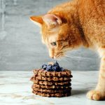 Cute Red Cat Smells Homemade Waffles with Lavender Sweets Topping. Selective Focus.