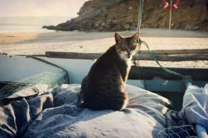 Katze im Boot