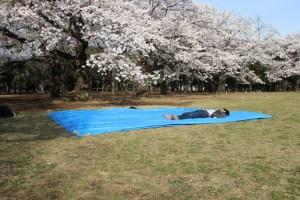 桜 花見 場所取り マナー