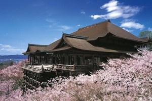 桜 開花予想 2015年 清水寺