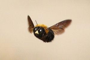 蜂に刺された時の症状を蜂ごとに! かゆみや痛み、動画付き ...