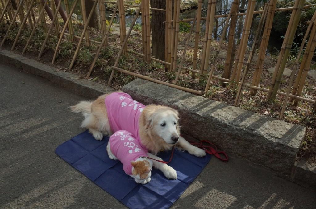 一人暮らし ペット 犬 猫