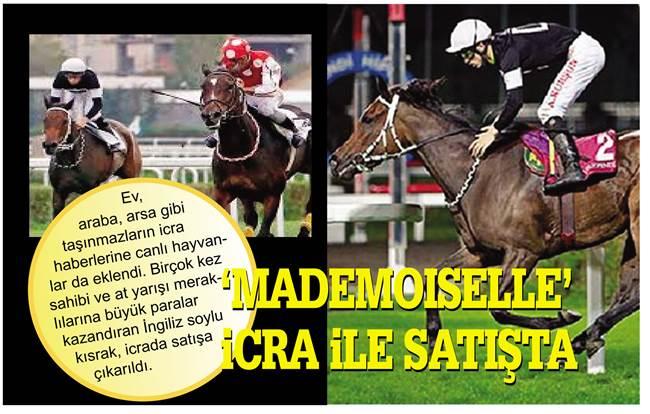 Bursa'da 12 birinciliği bulunan yarış atı icralık oldu