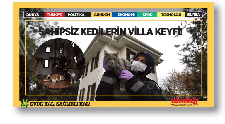 En Şanslı Kediler Osmangazi'de