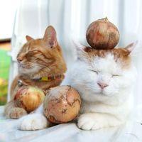 猫が玉ねぎを食べたら