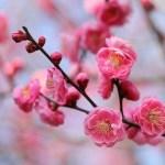 立春の意味とは?季節の節目「二十四節気」を覚えよう!