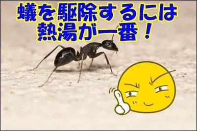 蟻の駆除薬最強は熱湯