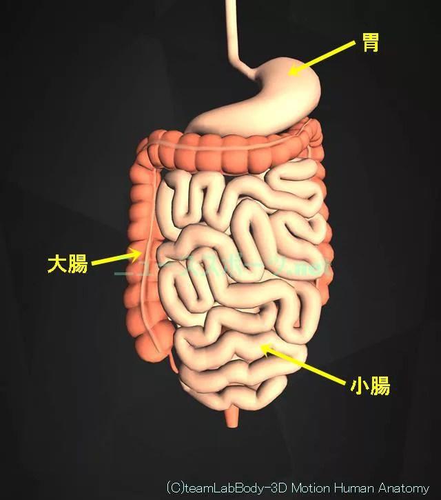盲腸の痛みの場所を図や画像で解説!左じゃなくて右下腹部です4
