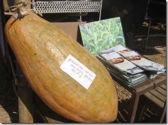 nuwakot_35kg-pumpkin