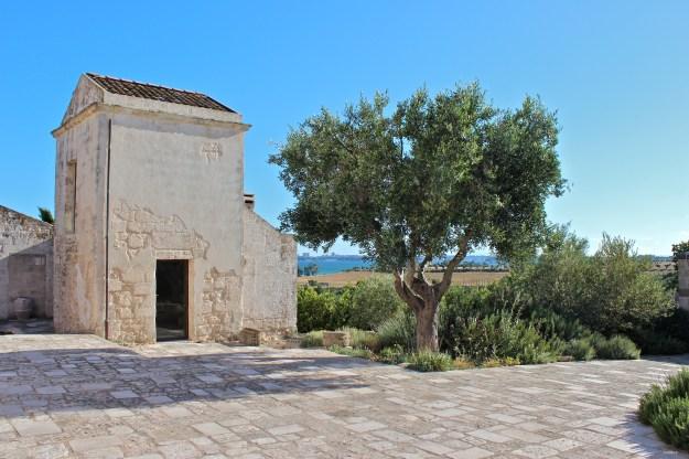olivegroves2