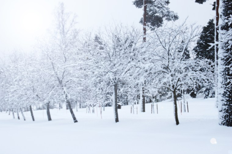snowwalk4