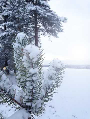 snowwalk6