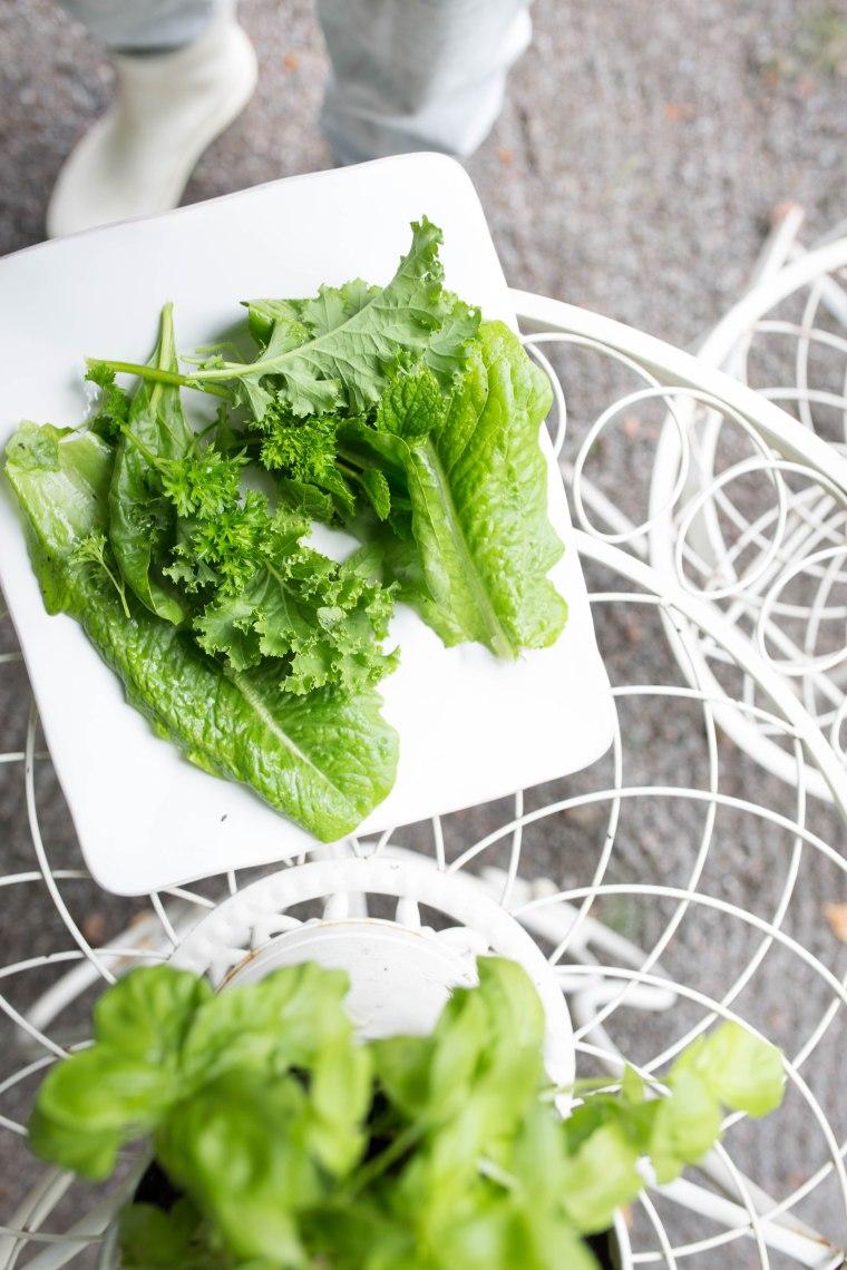 salad (1 of 1)