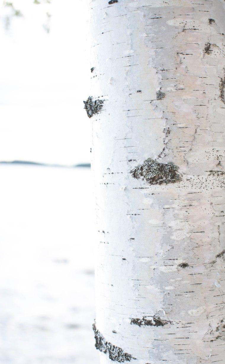 white linen1 (1 of 1)