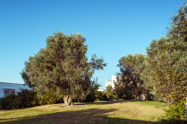 Garden_view_1