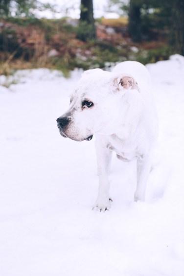 White fur2 (1 of 1)
