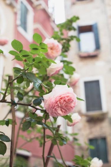 venice hidden roses courtyard (1 of 1)