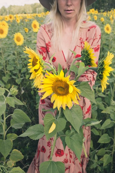sunflower fields2