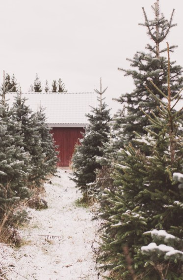 christmastree65