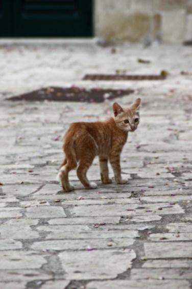 kittyotranto