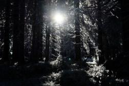 Sonne & dichter Wald (bei der Hornisgrinde)