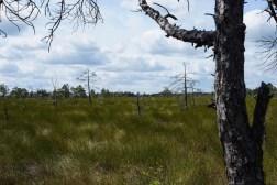 Store-Mosse Nationalpark - öde Weite ... so interessant verlief ein kilometerlanger Rundweg