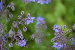 Store-Mosse Nationalpark - Blumenpracht im Süden (nahe des Herrestadsjön)