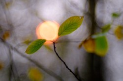 sunberry (1)