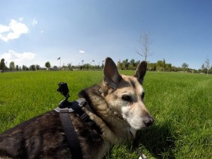 GoPro fetch mount
