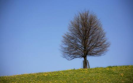 Обои небо скачать для рабочего стола, фото дерево