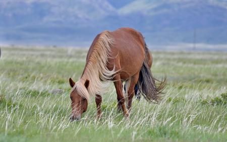 Картинки конь скачать на рабочий стол, фото поле
