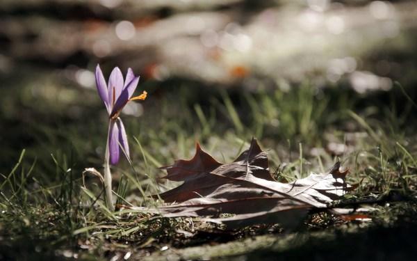 Картинки цветок скачать для рабочего стола, фотографии лист