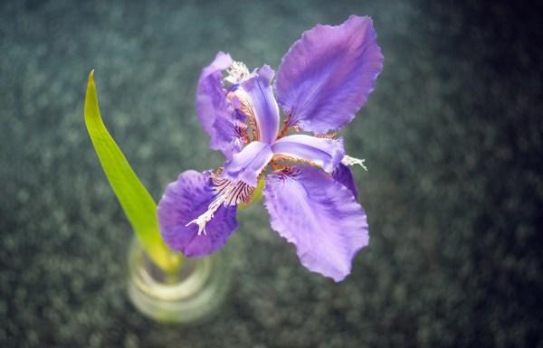 Картинки цветок скачать для рабочего стола, фотографии ...