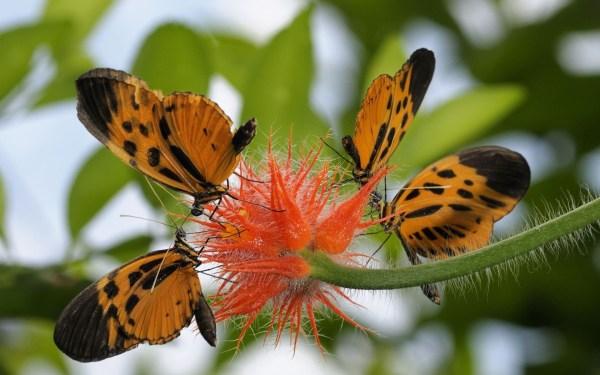 Обои бабочки скачать для рабочего стола, заставки цветок