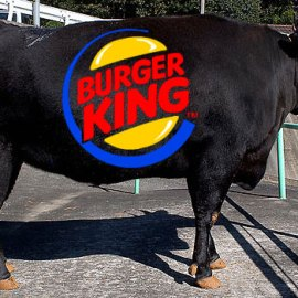 UK Burger King serves Kobe Beef burger