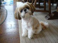 Pedi Japanese Pet Social Networking