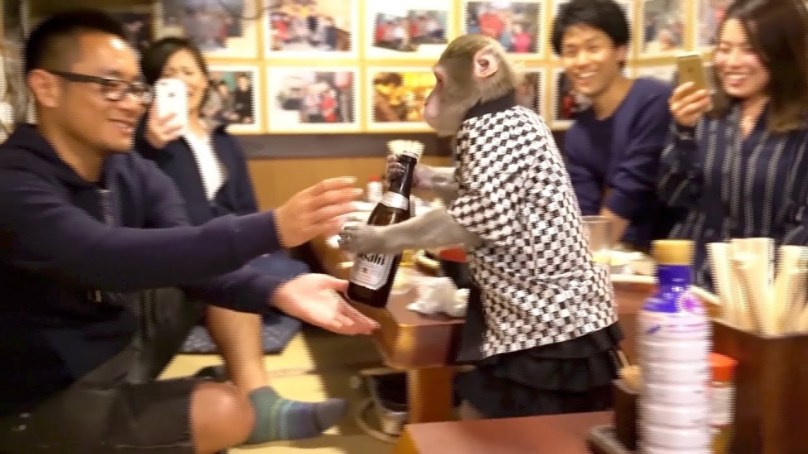 Japanese restaurant has monkey waiters