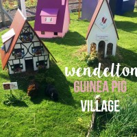 Road Trip Chronicles - Wendelton Guinea Pig Village