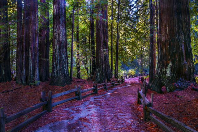A Day Exploring Big Basin Redwoods State Park travel