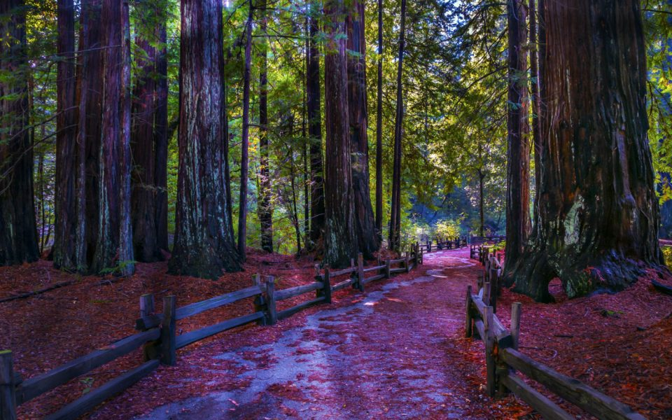 A Day Exploring Big Basin Redwoods State Park